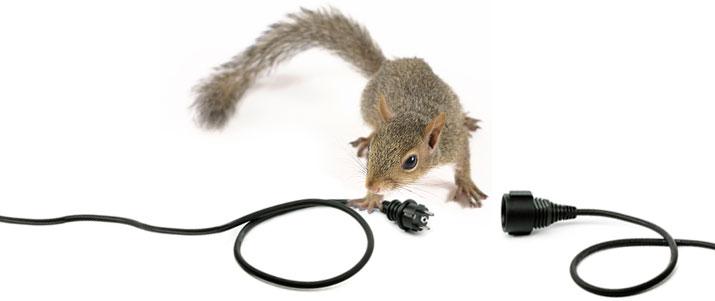 Squirrel Removal VA - VA Animal Removal - VA Animal Exterminator