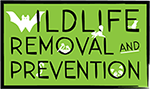Wildlife Removal - Wildlife Prevention - Hampton Roads Pest Removal